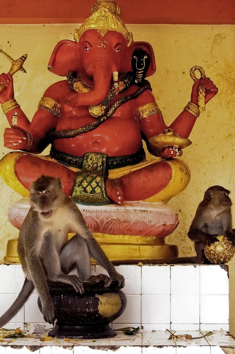 Monkey_1